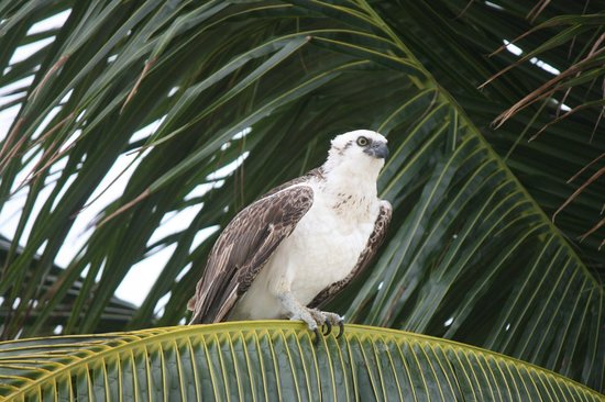 Blackbird Caye Resort: one of the many birds