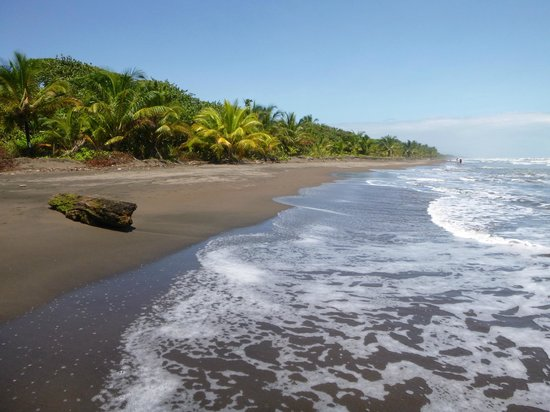 Laguna Lodge Tortuguero: Playa hacia el aeropuerto