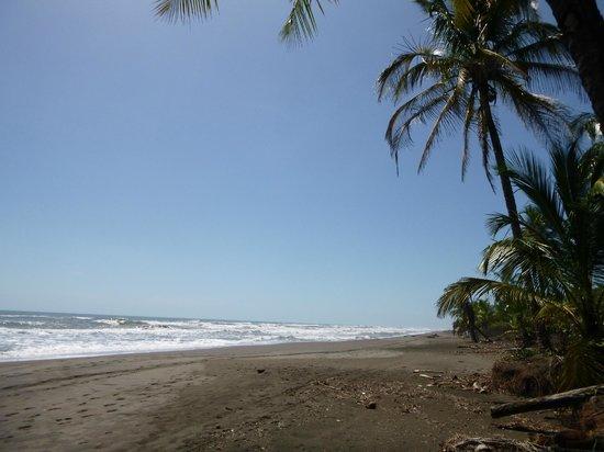 Laguna Lodge Tortuguero: Playa hacia el pueblo