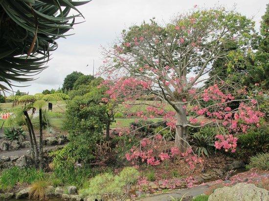 Auckland Botanic Gardens Picture Of Auckland Botanic