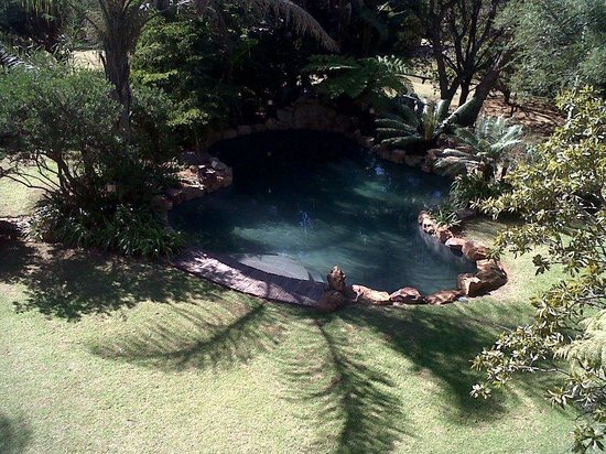 Dark Chocolate Superior Guest House: Pool