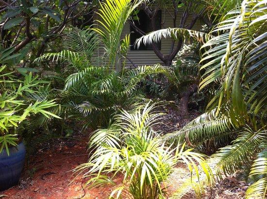 Cocos Beach Bungalows: garden