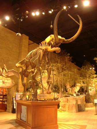 Creation Museum: Mastodon Skeleton