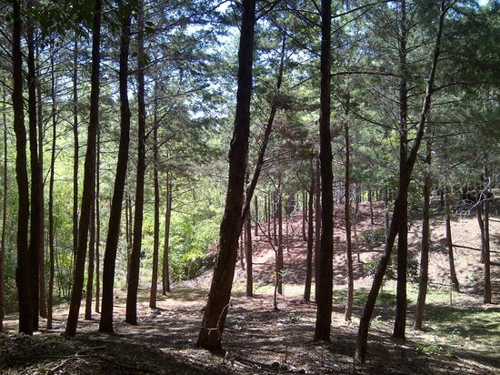 Entre Pinos Hotel & Resort: Pine woods are very pleasant for a stroll.