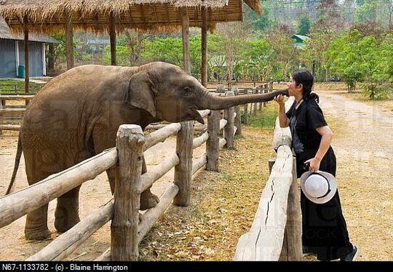 Hotels Near Elephant Nature Park Chiang Mai