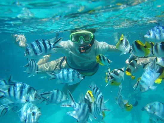 Four Seasons Resort Bora Bora: Snorkelling trip with Alex