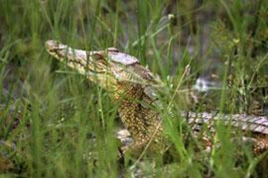Crocodile Creek Photo