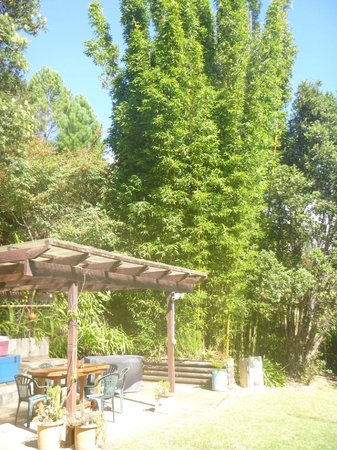 Sunseeker Lodge : trees
