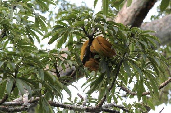 Napo Wildlife Center Ecolodge: Amazon Tree Boa