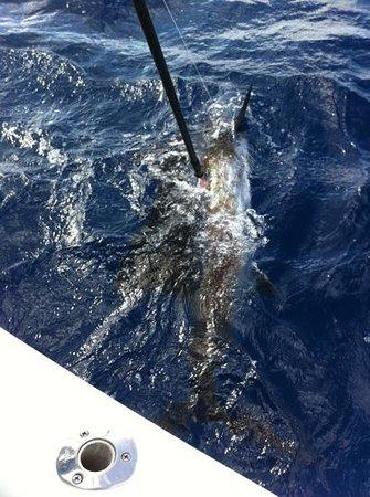 FishCastings : tagging sailfish