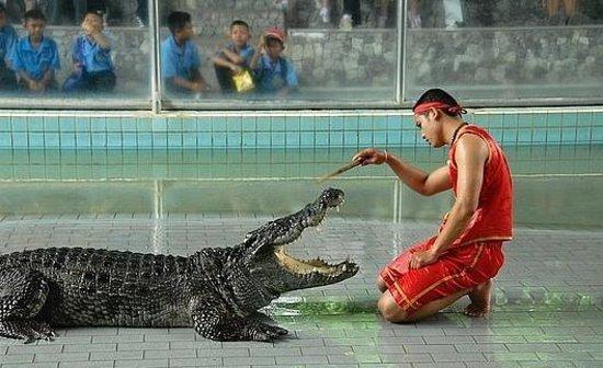 Crocodile Farm and Sea Aquarium (Phuket, Thailand) - Beoordelingen