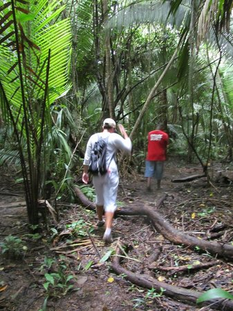 Monkey River Tour: Jungle trail to howler monkeys