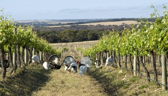 Kangaroo Island Gateway Visitor Information Centre: Dudley Wines Vineyards