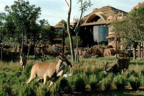 Disney's Animal Kingdom | Disney Discount Tickets, Crowds, Hours ...
