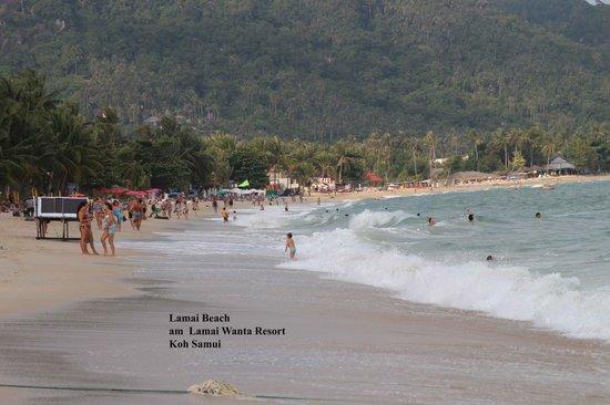 Lamai Wanta: Strand links vom Hotel