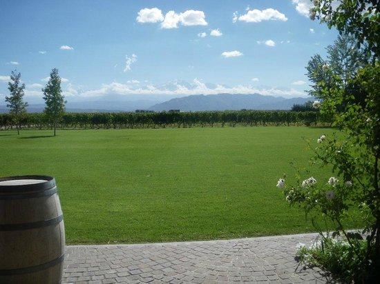 Ampora Wine Tours: Ruca Mallen View
