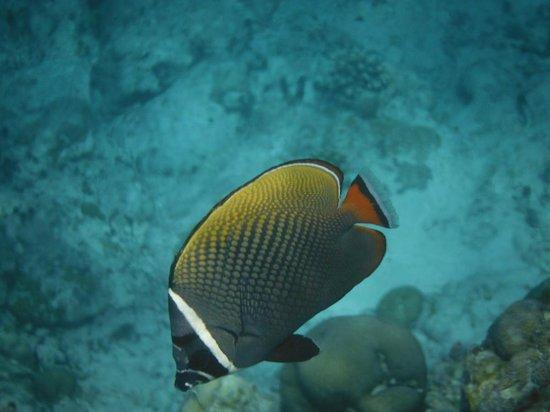 Cocoa Island by COMO: Snorkeling