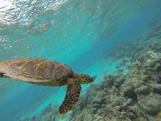 Cocoa Island by COMO: Turtle