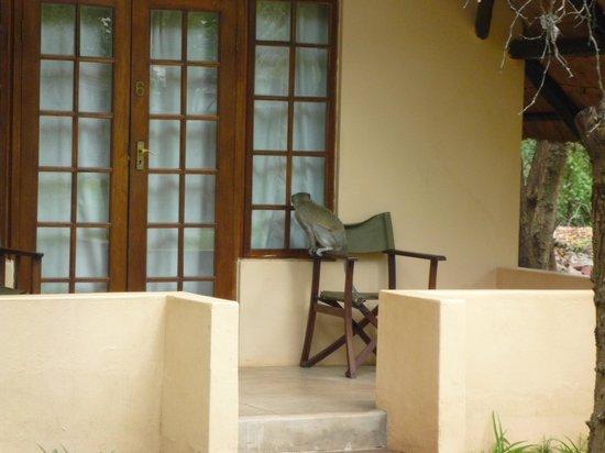 Bushfront Lodge: Keep the door shut!