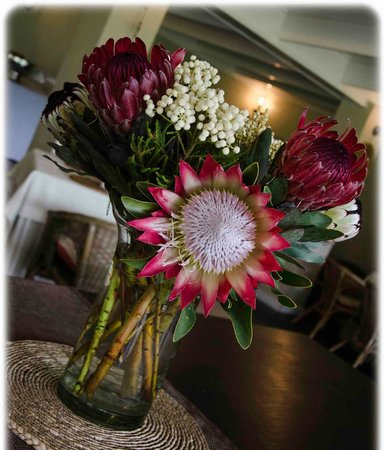 Blue Gum Country Estate: Local Proteas