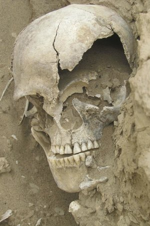 Kuiseb Delta Adventures: human skull at a burial ground