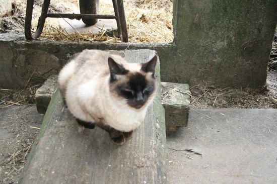Ferienwohnung Eisenmann: Barn Kitty