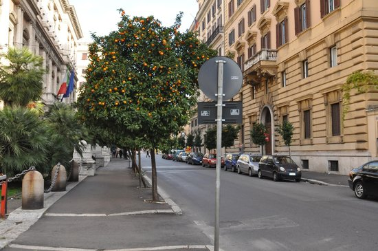 Hotel Moses Fountain: Linda rua em fruto