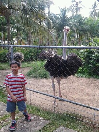 Albuera, Filippine: My nephew Andrei was enjoying in the Agalon Zoo. :)
