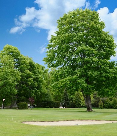 Manitoulin Island Country Club: Tree on #7