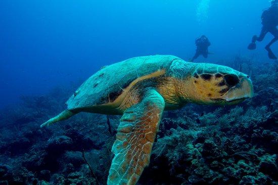 Blackbird Caye Resort: Amazing Discoveries