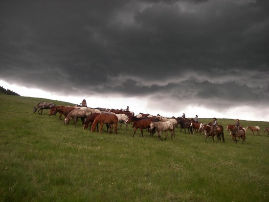 Nine Quarter Circle Ranch: Spring Roundup on our Winter Pasture