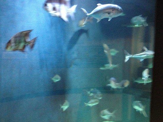 Jennettes pier fish tank inside the building