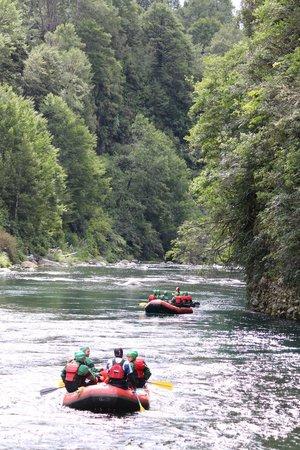 Rafting New Zealand: Beautiful bush