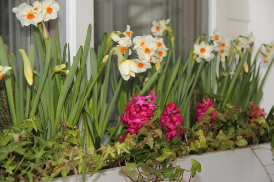 The Hob Knob: Spring at last
