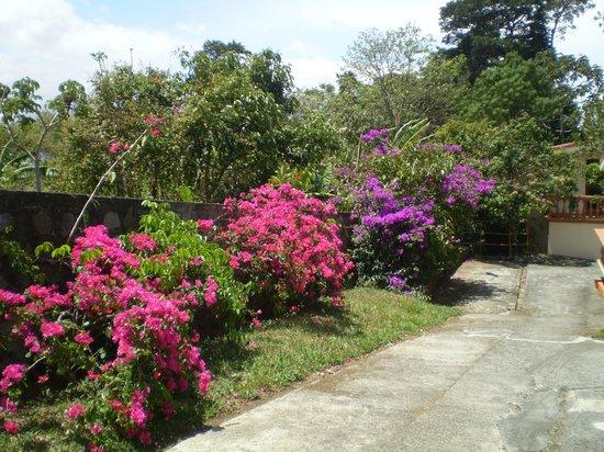 Hotel Desire Costa Rica : Garden walking path