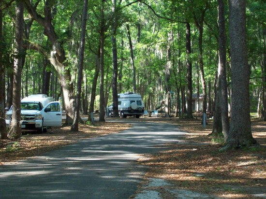 Skidaway Island State Park : Looking down through some of the campsites