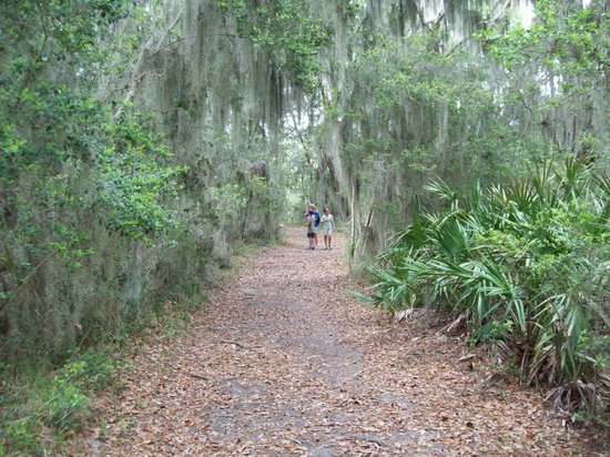 Skidaway Island State Park : One of the beautiful areas along a Skidaway nature trail