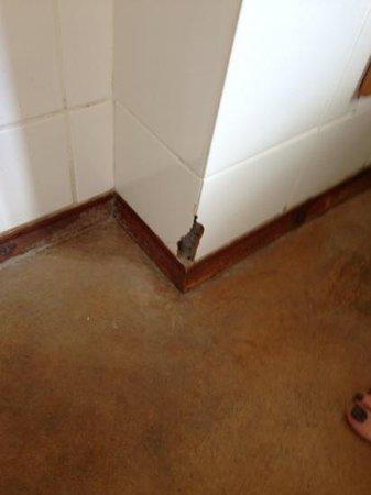 Spier Hotel: cracked tile in bathroom