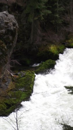 Trail to Benham Falls: Contrast