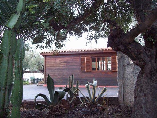 Camping Bon Sol : Recepción y cactus
