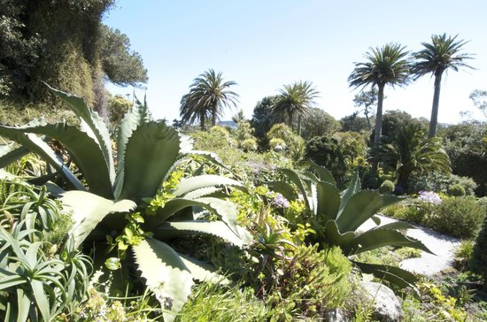 Schiller Holiday Suites: Tresco Gardens...said to be a sub-tropical paradise of plants from around the world..