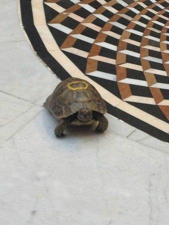 Riad Dar Anika: Couscos one of the tortoises
