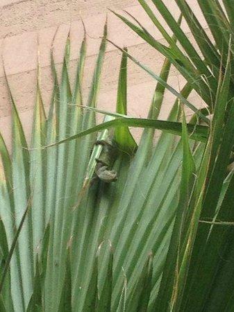 Riad Dar Anika: chameleon