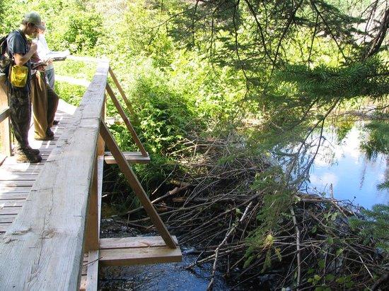 Beetle Lake Trail Foto