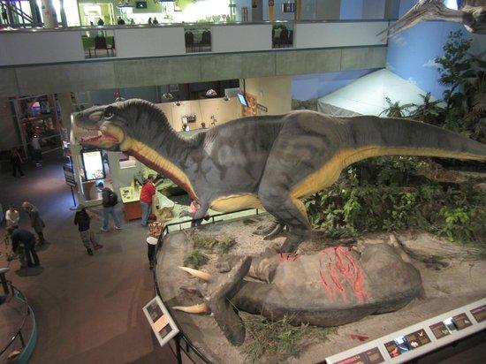 Saint Louis Science Center: Tyrannosaurus Rex animatronic exhibit