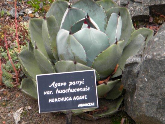 Mendocino Coast Botanical Gardens: Variedad de ejemplar