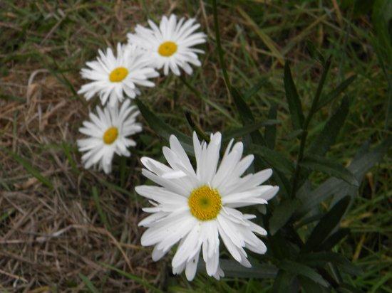 Mendocino Coast Botanical Gardens: Flores