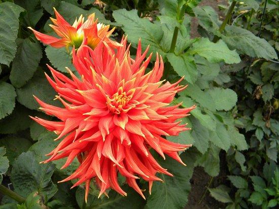 Mendocino Coast Botanical Gardens: Flor