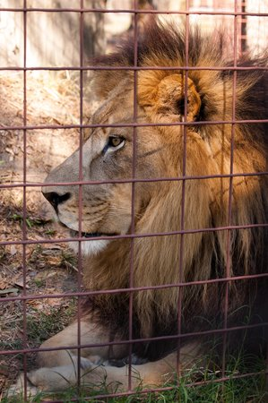 Big Cat Rescue: Photo 10