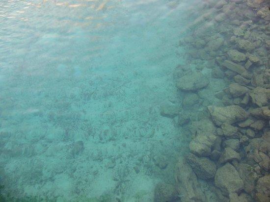 The Royal Sea Aquarium Resort: Caribean Sea